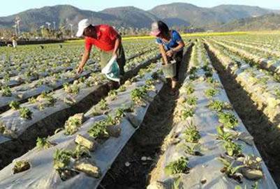 作物生产技术专业