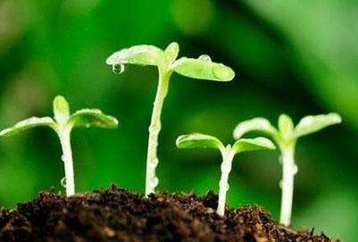 植物保护专业